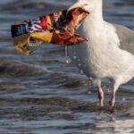 La Cina vieterà i sacchetti di plastica in tutte le principali città entro la fine del 2020