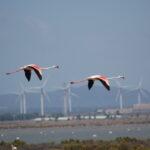 Eolico: un tocco di vernice per salvare gli uccelli!